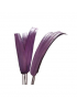 TIGE EVENTAIL LILAS